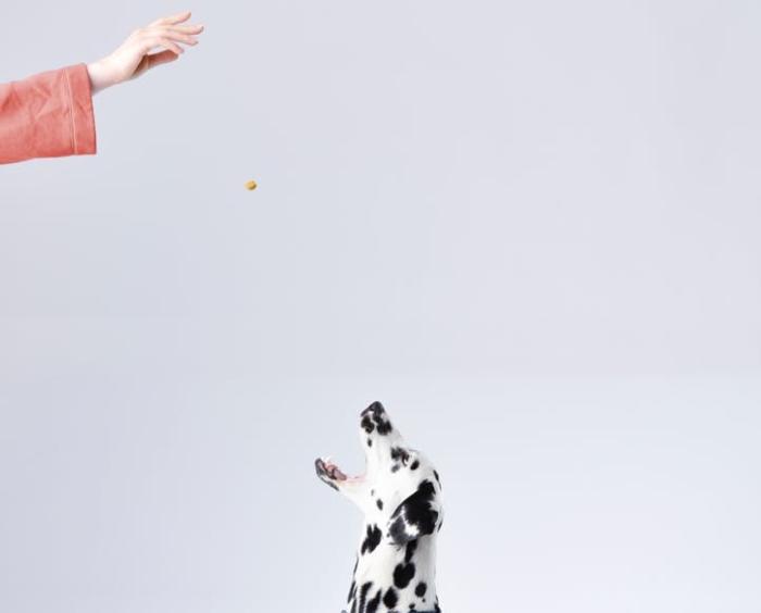 ჭამეთ საკუთარი ძაღლის საკვები  - წარმატება დეტალებშია