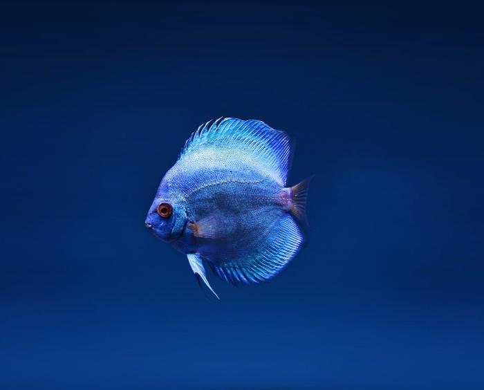 ფერთა პალიტრა თქვენი ბიზნესისთვის- ლურჯი ფერი